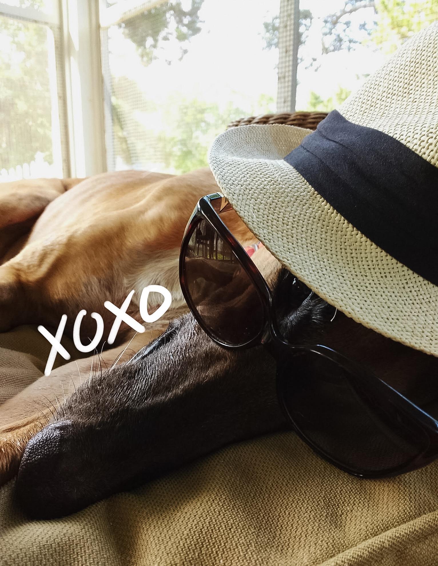 Summer, sunglasses, and booze hound.